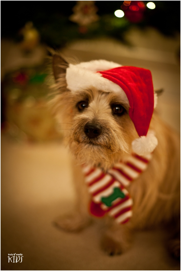 Merry Christmas – from Digby Dog, our Canine Correspondent
