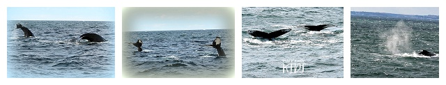whale watching, cape cod, travel with kids