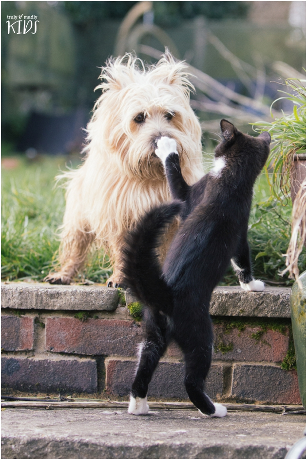 cat and dog, cat playing with dog