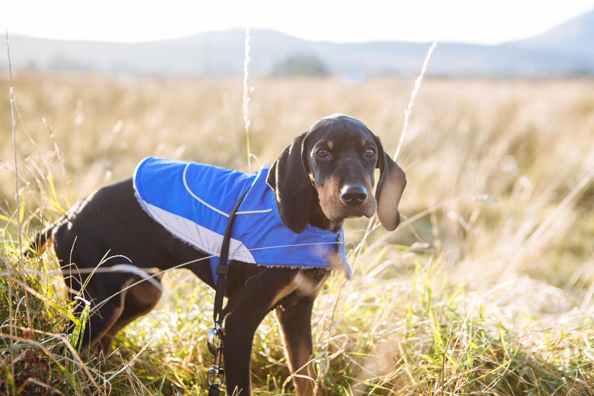 Adopt dont shop, puppy adoption, rescue puppy, rescue dog, cyprus, pointer, jura mix