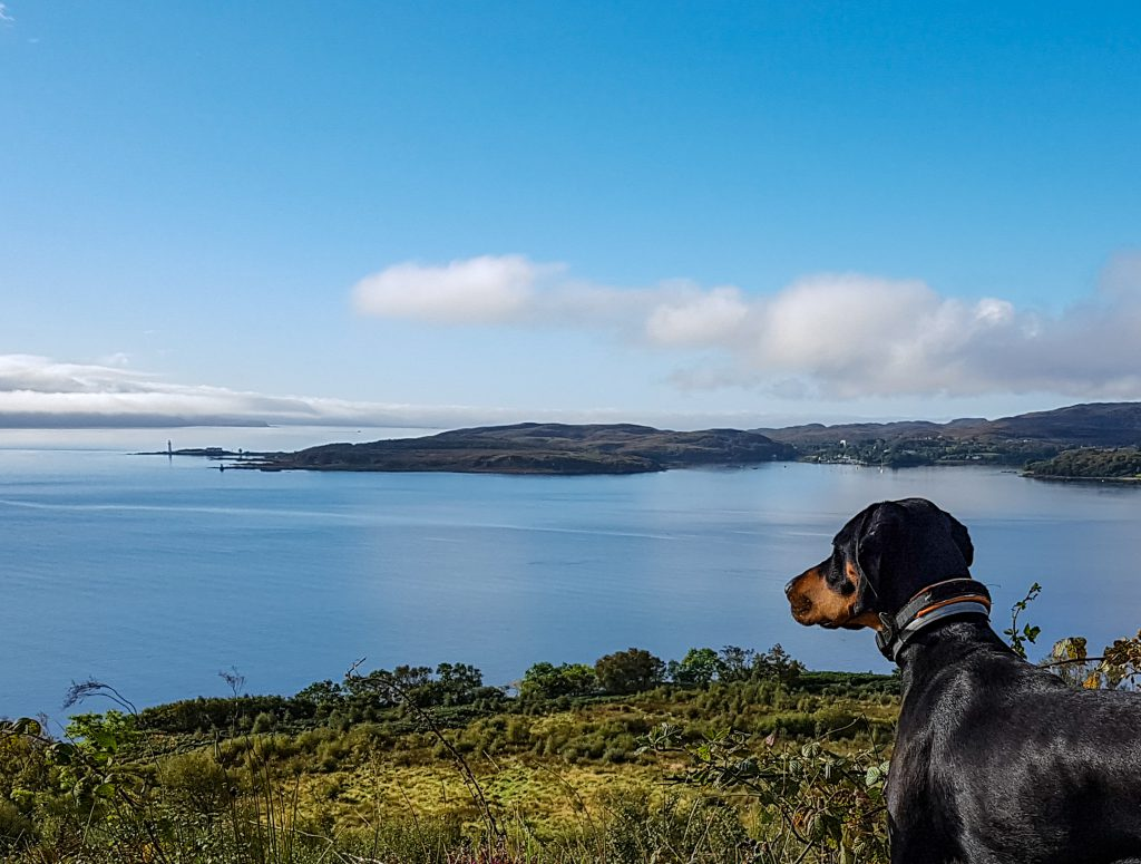 Pointer rescue dog walking on Isle of Skye