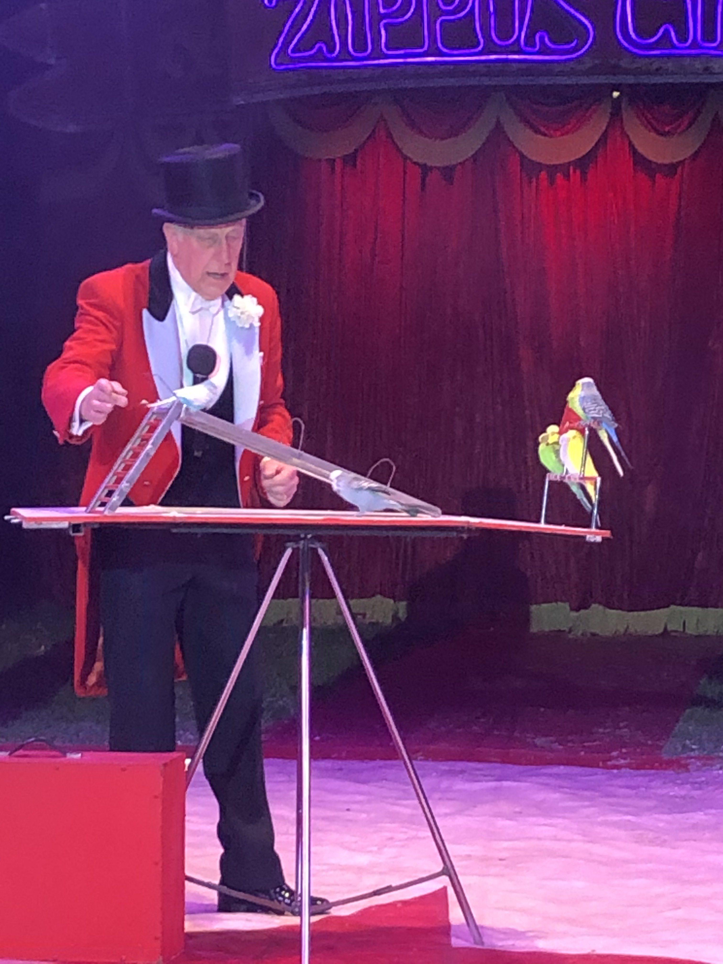 zippo's circus, performing budgies